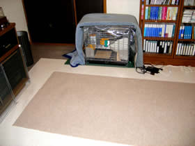 絨毯を敷いたうさぎとの遊び場